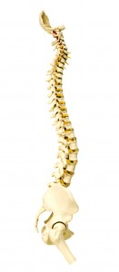Eugene chiropractor, your spine specialist