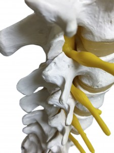 Eugene chiropractor for musculoskeletal injuries