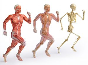 Chiropractic care for muscles and spine